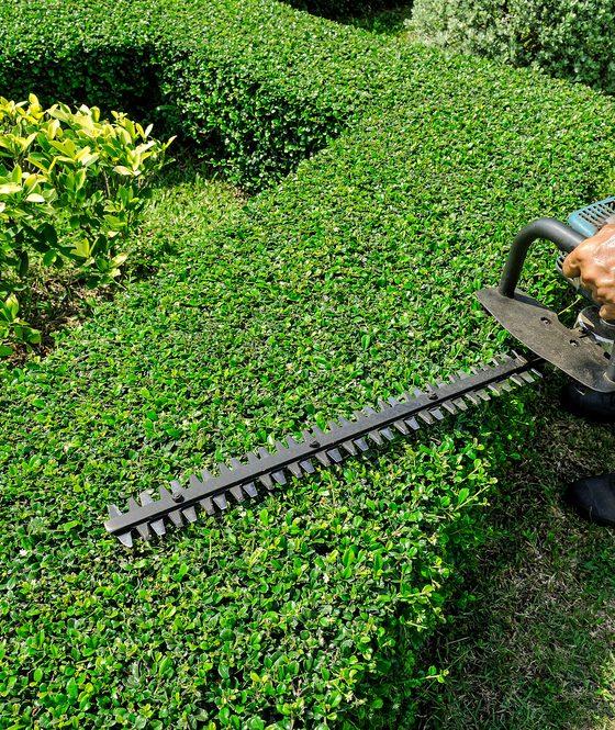 landscape maintenance dubai